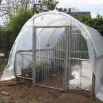 Greenhouse Gardening – 4 Factors to Consider Before Having a Greenhouse