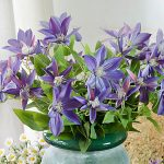 New Three Branches Clematis <b>Florida</b> Thunb Vivid Artificial Flowers Plant Home and <b>Garden</b> Decoration 69cm Gift