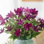 Best Three Branches Clematis <b>Florida</b> Thunb Vivid Artificial Flowers Plant Home and <b>Garden</b> Decoration 69cm Gift