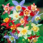 100 Pcs/Bag Best-Selling!Aquilegia Seedling Bonsai plants easy to grow Plante for home & <b>garden</b> flower Plantas