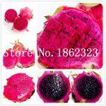 100 pcs/bag Red Pitaya Bonsai Dragon Pitaya Fruit <b>Garden</b> Bonsai Tree Fruit-tree-plant Delicious <b>Tropical</b> Fruit Food Pot