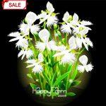 Time-Limit!!Egret Flower Bonsai Perennial Flowering Plants Potted <b>Garden</b> Interesting Plants 50 Particles/lot,#KLJOIG